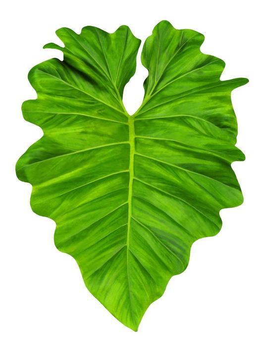 Philodendron Large Jungle Leaf Wall Decal