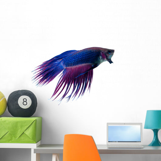 Siamese Fighting Fish Wall Decal