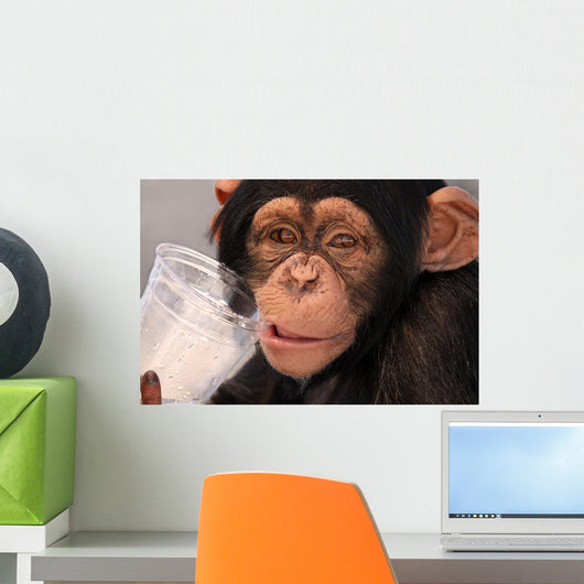 Thirsty Chimp Wall Mural