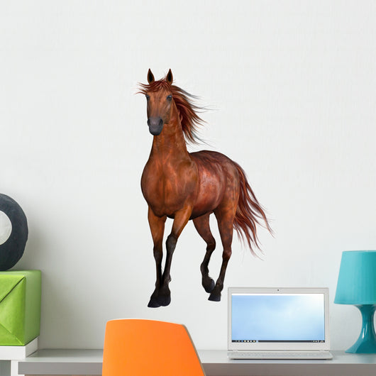 Beautiful Horse Wall Decal