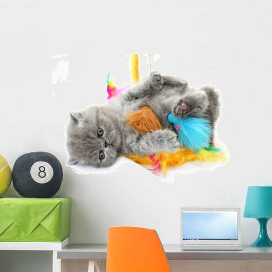 Blue Exotic Kitten With Cats Toy Wall Decal
