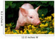Lucky Pig in Flowers Wall Mural