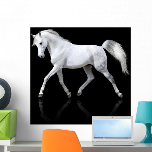 Trotting White Arabian Horse Wall Decal