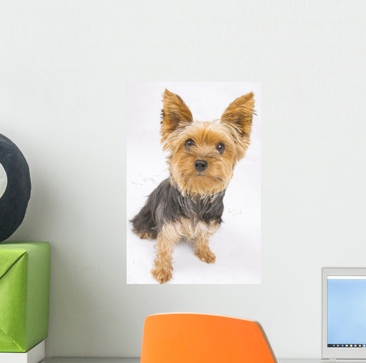 Yorkshire Terrier Dog Wall Decal