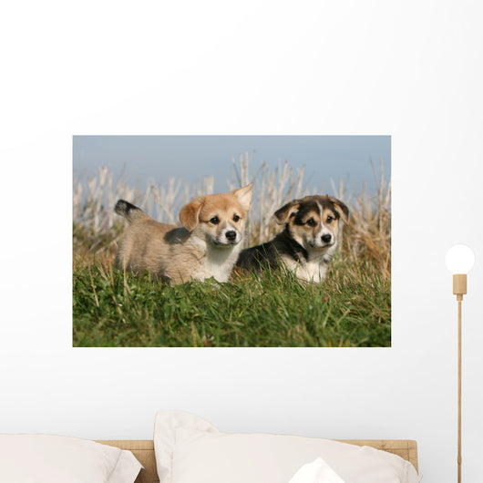 Two Puppies Stroll in the Countryside Wall Mural