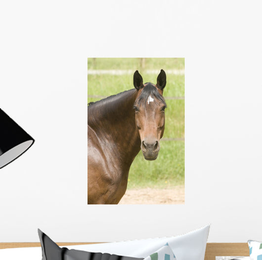 Horse Wall Decal Design 3