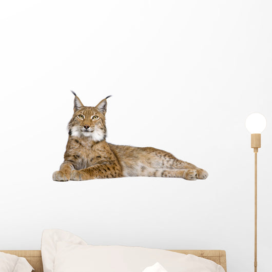Eurasian Lynx Wall Decal