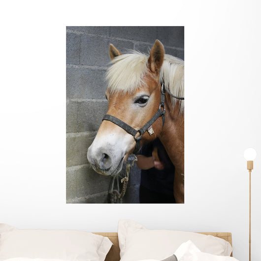 Brushing Horse Wall Decal