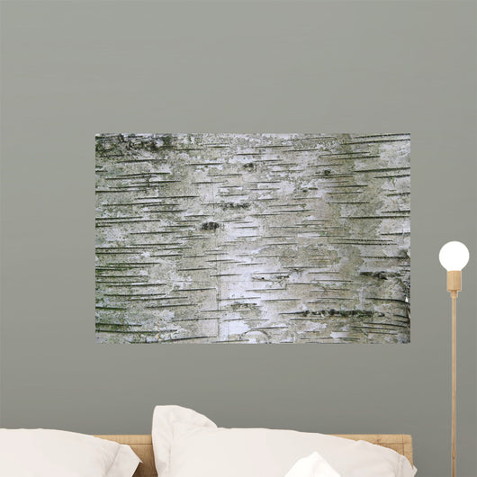 Birch Wood Texture Wall Mural