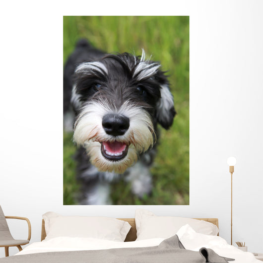 Mini Schnauzer Smiling in the Park Wall Mural