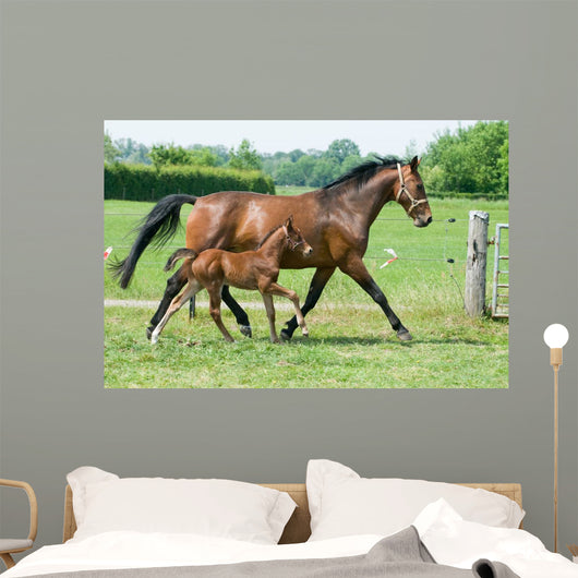 Mare and foal running Wall Mural