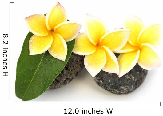 three yellow frangipani flowers on rollers Wall Decal