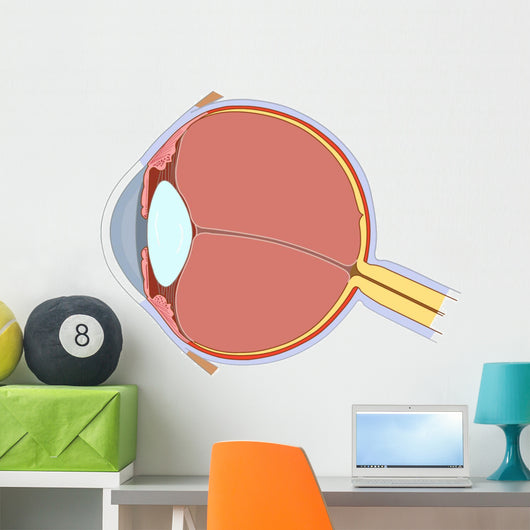 Eye Anatomy Wall Decal