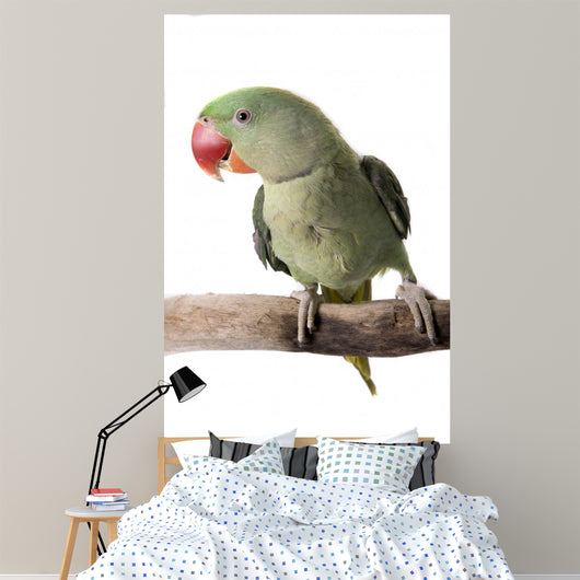 Parakeet Alexandrine White Wall Decal Design 1