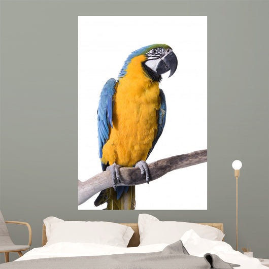 Macaw Blue and Gold Wall Decal