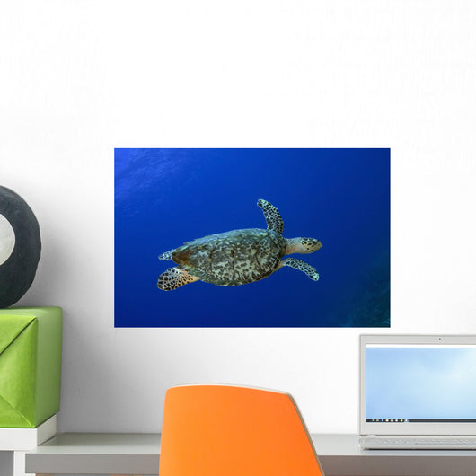 Hawksbill Sea Turtle St Wall Decal