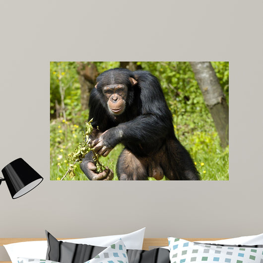 Chimpanzee Wall Decal