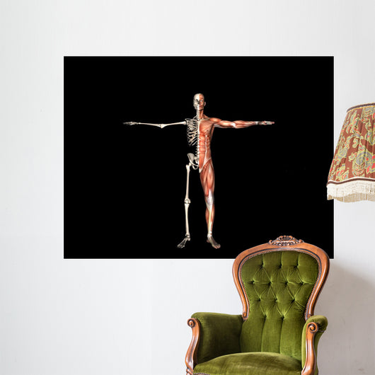 Anatomy Man Wall Decal