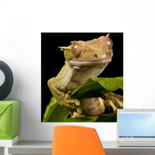 New Caledonian Gecko Wall Decal