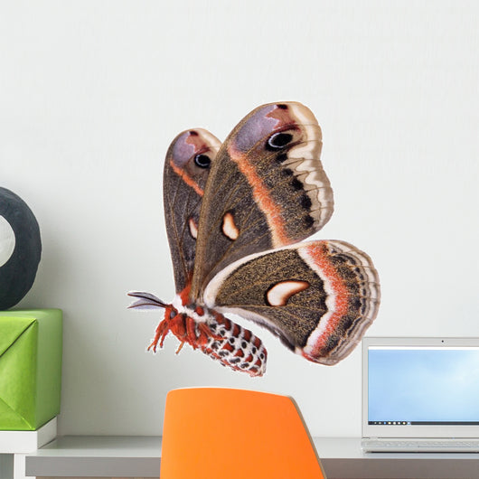 Flying Cecropia Moth White Wall Decal