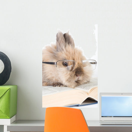 Brown Bunny with Glasses Wall Mural