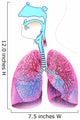 Respiratory System Anatomy Wall Decal