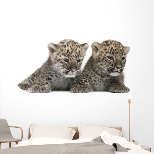 Persian Leopard Cub Wall Decal Design 2