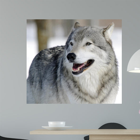 Gray Wolf Wall Mural