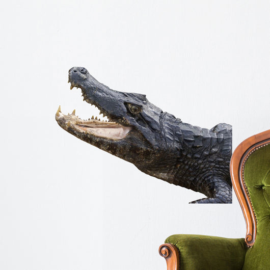 Alligator White Wall Decal