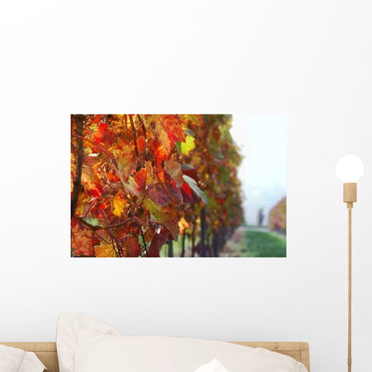 Autumn Vineyard Wall Mural