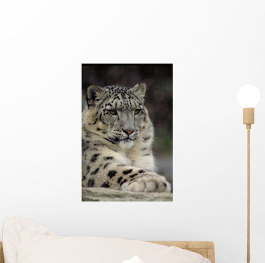 Snow Leopard Wall Decal