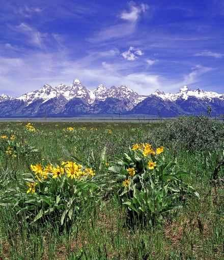 Spring Time Grand Tetons Wall Decal