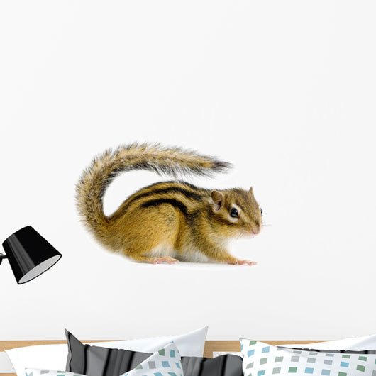 Ecureuil Chipmunk Ou Cureuils Wall Decal