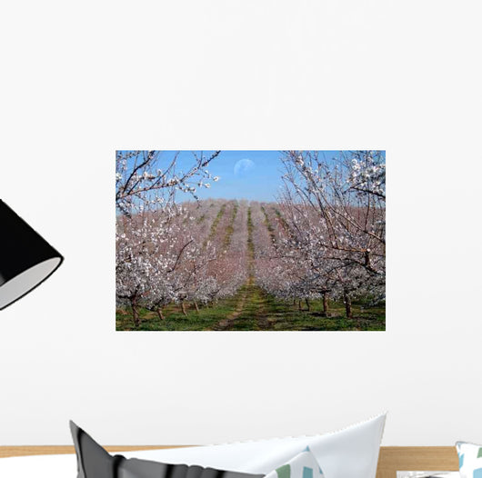 Almond Trees Landscape Wall Mural