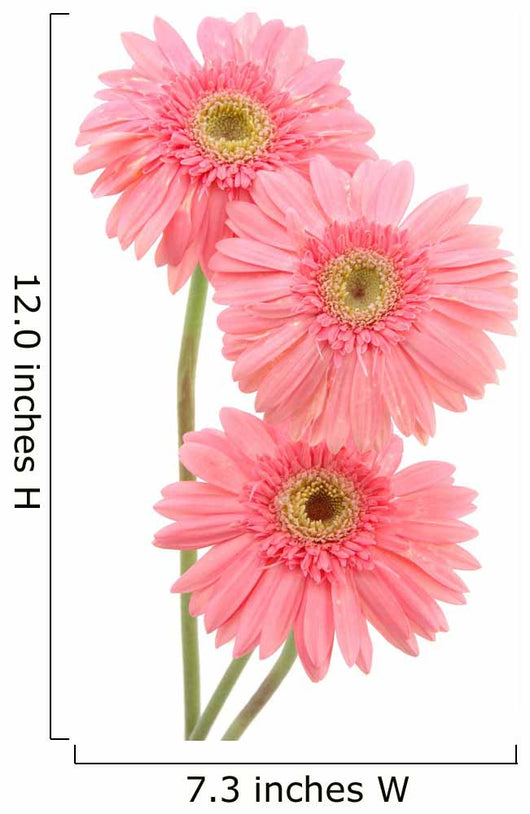 Pink Gerber Daisies Wall Decal
