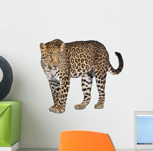 Portrait Leopard Panthera Pardus Wall Decal