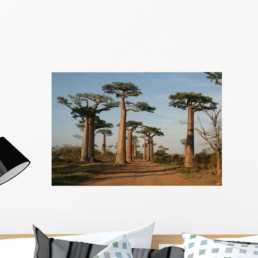 Allee Des Baobabs Wall Mural