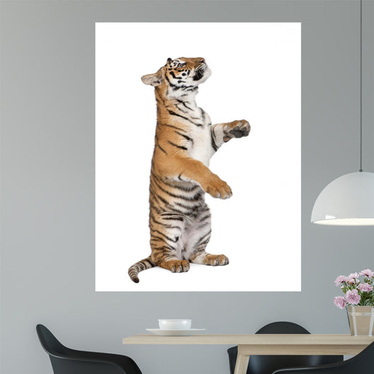 Bengal Tiger Wall Decal