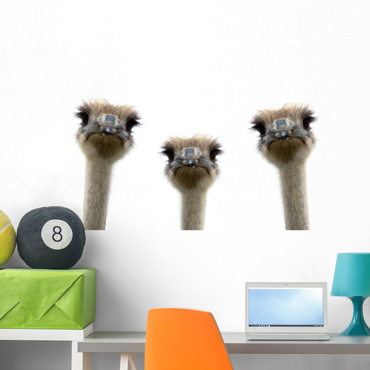 A group of ostriches isolated on white background Wall Decal