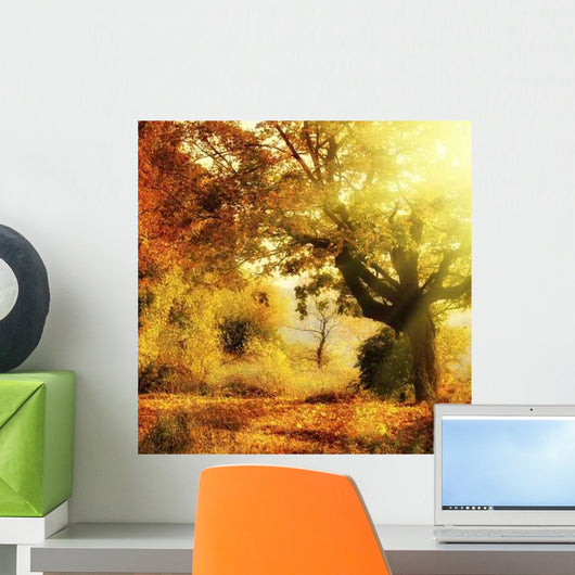 Autumn Forest with Sun Wall Mural
