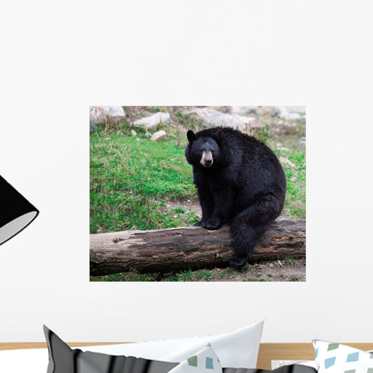 American Black Bear Sitting on a Tree Trunk Wall Mural