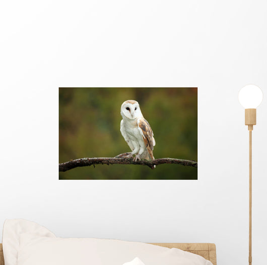 Barn Owl Wall Mural