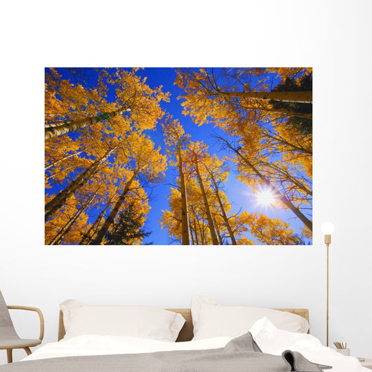 Upward View Of Trees In Autumn Wall Mural