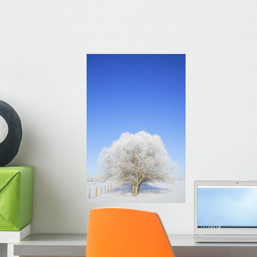 Frosty Trees Wall Mural