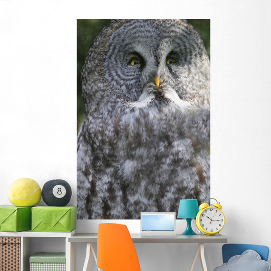 An Owl Wall Mural