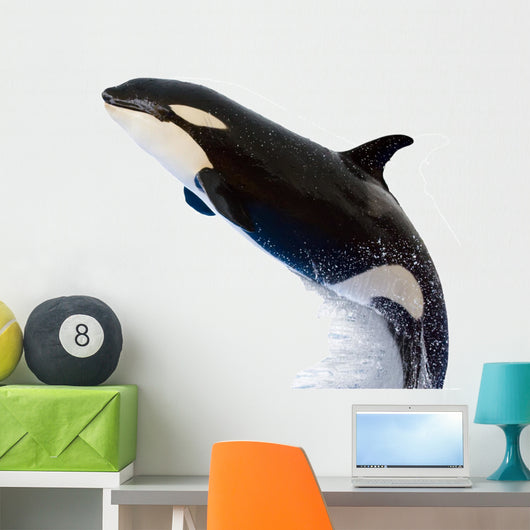 A Killer Whale Wall Decal