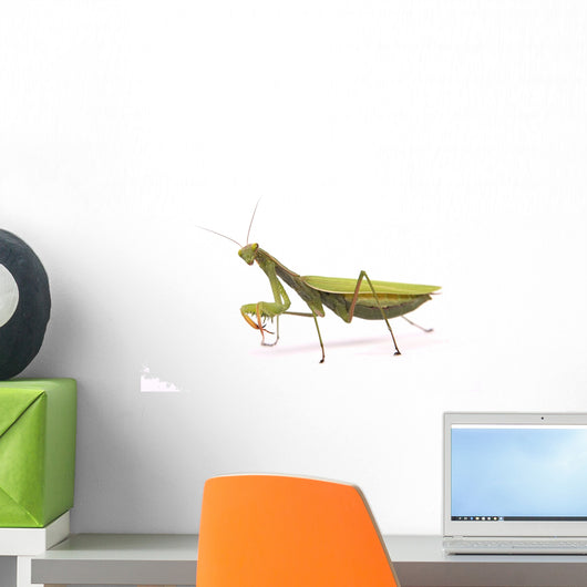 Praying mantis Wall Decal