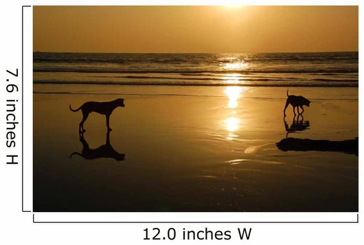 Two Dogs Beach Sunset