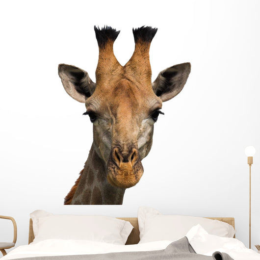 Giraffe Isolated Wall Decal