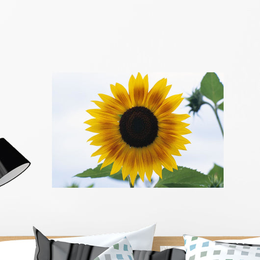 Close-Up Of Blooming Sunflower Wall Mural